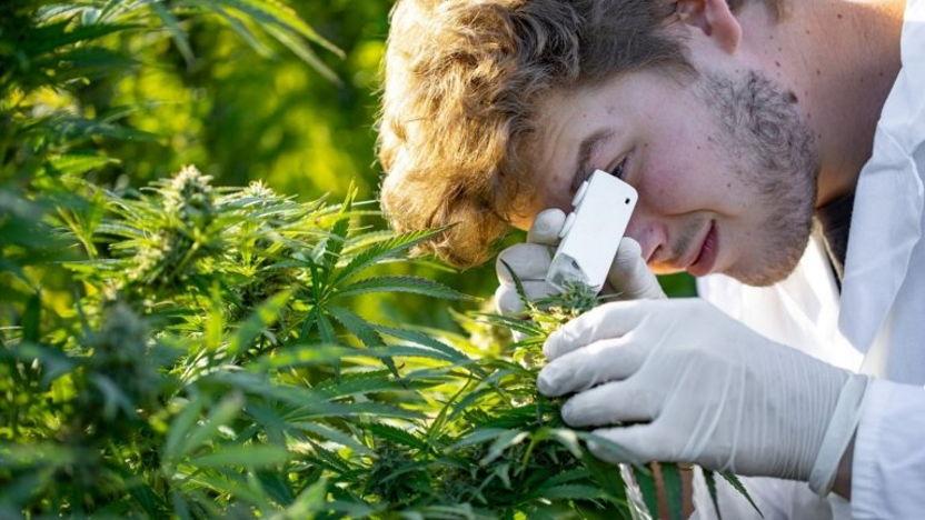 Digitale Handelsmissie naar Colombia voor Nederlandse toeleveranciers aan de Medicinale Cannabis sector