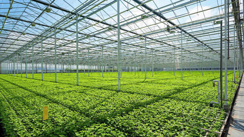 New Operations at Holland House Mexico: Introducing HHM Agri-Food & Horticulture