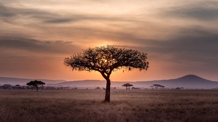 Webinar Ondernemen in Afrika